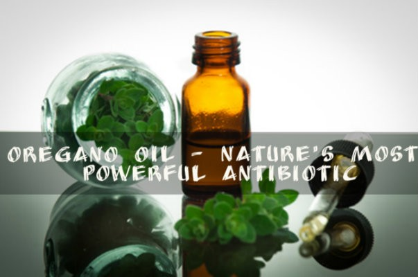 Oregano oil is a powerful antibiotic. It has eight times more antioxidants tan apples and three times as much as blueberries. Oregano oil has been used as a remedy for over a thousand years. The Greeks are the first known people to have used it for medicine and its main use was to treat respiratory and digestive diseases.